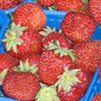 63-jordbær.jpg
